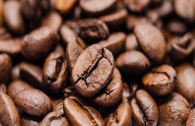O Sistema de Manejo nas lavouras cafeeiras do Sudoeste da Bahia